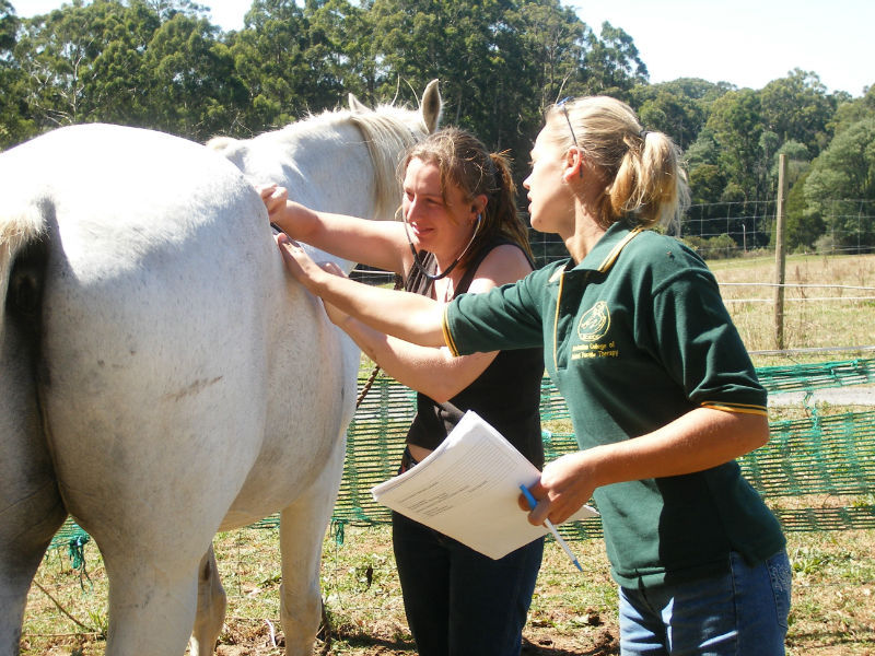 highly qualified equine massage practitioners