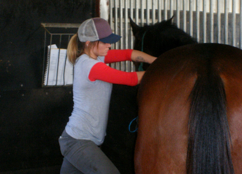 equine nutritionist