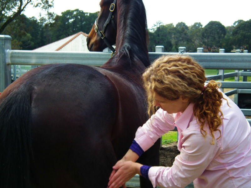 health and natural feed for horses