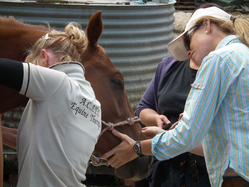 Equine massage therapist