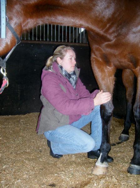 horse nutrition therapist
