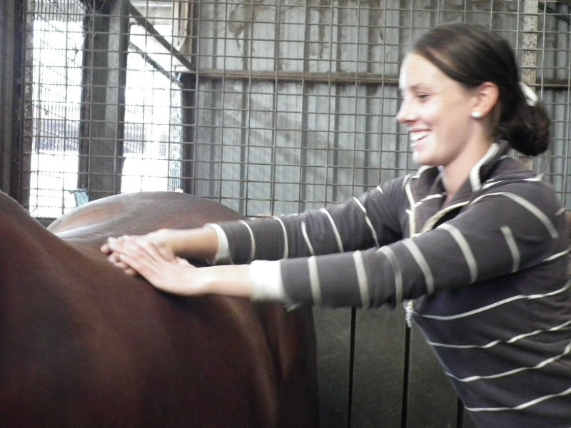 equine massage therapists