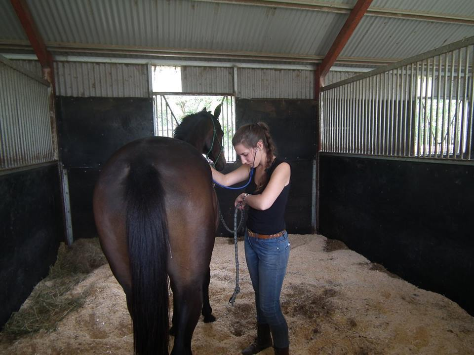 Equine Health assessment