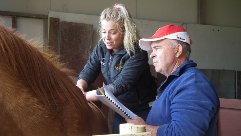 Horse Massage workshop