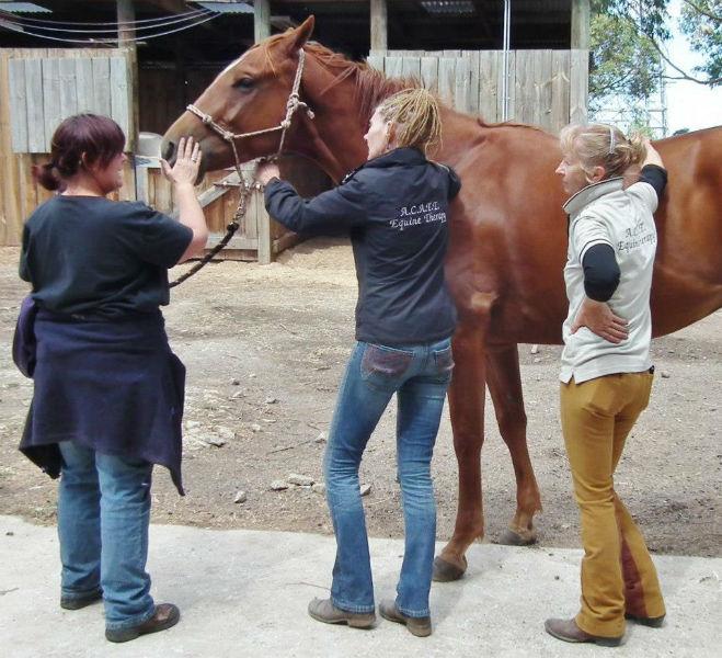 Horse massage instruction