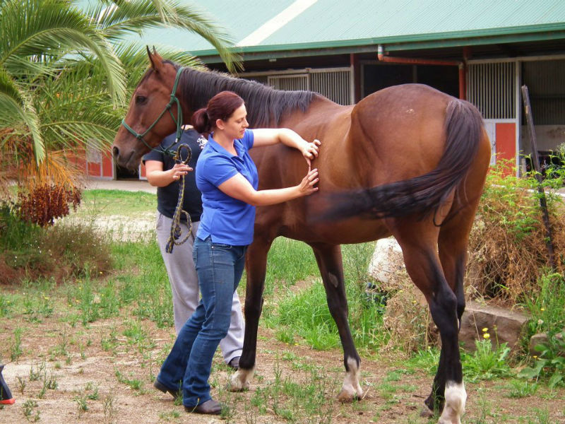equine massage strokes