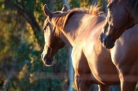 Our Equine therapy Newsletter