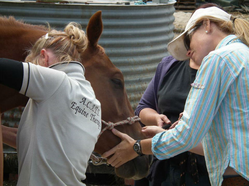 Courses in Equine nutrition and health